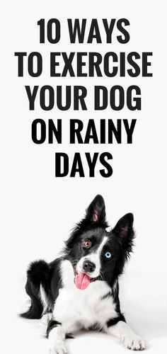 10 Ways To Exercise Your Dog On a Rainy Day Being stuck indoors makes giving your dog their daily exercise a challenge. Most dogs need daily exercise, and when you can't go outdoors meeting your daily exercise goal for your dog is hard. Golden Retriever, Labrador Retriever, Dog Training Tips, Agility Training, Dog Agility, Potty Training, Training Equipment, Training Videos, Training Pads