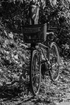 Basket Bycycle, Montréal, Québec.  Photo by Richard Guimond ©2016 20161006 0006(3)f Canon EOS 40D 75-300mm at 84mm 1/400 f9