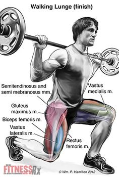 Powering Your Thighs and Hips with Walking Lunges! Men's Health Fitness, Fitness Facts, Wellness Fitness, Muscle Fitness, Men's Fitness, Fit Board Workouts, Fun Workouts, Muscle Diagram, Post Workout Drink