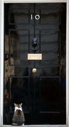 No. 10 Downing Street London, even the Prime Minister's cat is on the wrong side of the door!