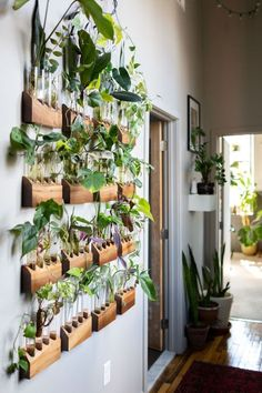 , The Plant Doctor's home tour is definitely full of plants and tons of unique ideas for displaying indoor plants in the home. We love the plant wall ha. , The Plant Doctor's Baltimore Home and Studio Are Absolutely Filled With Gorgeous Green Plants Easy House Plants, House Plants Decor, Plants In The Home, Decorate With Plants Indoors, Hanging Plant Wall, Diy Hanging, Plant Wall Decor, Hang Plants On Wall, House Plants Hanging