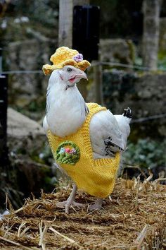 I wonder if this Spring chicken is happy with her new outfit.