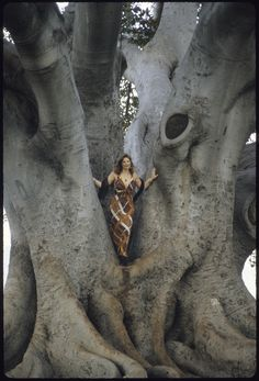 """Photographs for Laurie Z.'s solo piano album """"Roots"""" were taken in Santa Barbara, CA at the site of the famous Moreton Bay Fig Tree"""