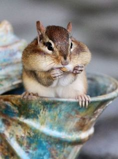 Chippy <3 - I think you can fit ONE more nut, don't you?