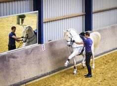 Work on long rein by Bas de Recht and pré stallion Lebrero. Picture made by HUiterwaalFotografie