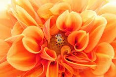 imagenes fotos en color naranaj - Búsqueda de Google Floral Flowers, Yellow Flowers, Paper Flowers, Dahlia, Color Naranja, Summer Gifts, Garden Pests, Garden Fertilizers, Floral Style