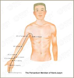 The Pericardium Meridian of Hand-JueYin (PC)