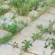 9 Most Effective Ways To Kill Weeds Naturally In Different Areas Of Your Yard – HealthTipsCentral Garden Landscape Design, Garden Landscaping, Organic Gardening, Gardening Tips, Gardening Books, Kill Weeds Naturally, Weed Seeds, Yard Design, Garden Care