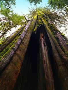 Coming to Port Renfrew, British Columbia, isn't just a visit to ancient trees; Capital Of Canada, West Coast Trail, Spring Break, Summer, Vancouver Island, Canada Travel, Buckets, British Columbia, Vacation Spots