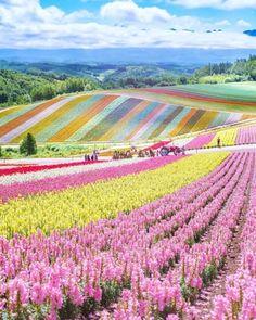 Wonderful Places: Flower field in Hokkaido - Japan ✨🌸🌸🌸✨ Picture by ✨✨ . Japan Picture, Japan Photo, Photo Japon, Nature Living, Nature Nature, Nature Photos, Wonderful Places, Beautiful Places, Beautiful Mess