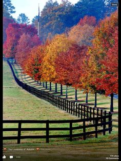 Beautiful yard - adore the trees, and love the fence.