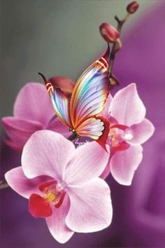 Decent Image Scraps: Butterfly and Orchids Animation Papillon Butterfly, Butterfly Gif, Butterfly Pictures, Butterfly Kisses, Beautiful Butterflies, Pink Flowers, Beautiful Flowers, Images Gif, Gif Pictures
