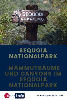 Zu den bekanntesten und schönsten Nationalparks der USA gehört der Sequoia Nationalpark in der Sierra Nevada im US-Bundesstaat Kalifornien. Er ist für seine gigantischen Mammutbäume bekannt. Möchtest du den Nationalpark erkunden, kannst du das mit dem Wohnmobil oder mit dem Mietwagen. #sequoianationalpark #nationalpark #usa #kalifornien Nationalparks Usa, Bryce Canyon, Sierra Nevada, National Parks, Books, Poster, State Of California, Sequoia National Park, Campsite