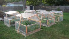 are my mini greenhouses for winter gardening. They open for venting; they These are my mini greenhouses for winter gardening. They open for venting; theyThese are my mini greenhouses for winter gardening. They open for venting; they Backyard Greenhouse, Small Greenhouse, Greenhouse Plans, Homemade Greenhouse, Greenhouse Wedding, Portable Greenhouse, Garden Care, Garden Beds, Jardin Decor