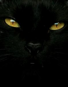 *nothing more special in the world to me than a black cat.
