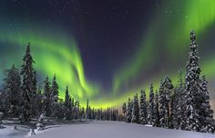 """""""Forest lights"""" Aurora Borealis over the forest of the Pyhae Luosto National Park, Finland. (Photo and caption by Nicholas Roemmelt / National Geographic Traveler Photo Contest) Aurora Borealis, Parc National, National Parks, Photography Contests, Travel Photography, Photography Tips, Countries Around The World, Around The Worlds, Travel Pictures"""