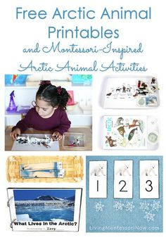 Lots of free Arctic animal printables along with ideas for preparing Montessori-inspired Arctic animal activities using free printables. Perfect for classroom or homeschool - Living Montessori Now Winter Activities For Kids, Animal Activities, Montessori Activities, Preschool Activities, Montessori Homeschool, Preschool Kindergarten, Homeschooling, Preschool Winter, Children Activities
