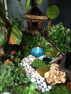 Fairy Garden, made in an hr. bird nest hutch from bunnings, deco's from pillow talk, miniature plants and ground crawlers from bunnings and I used the old leaves from palm trees to make the slippery slide.