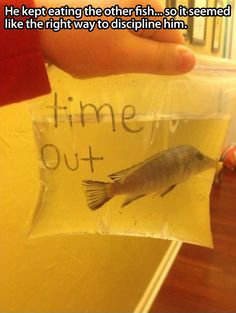Fish shaming // funny pictures - funny photos - funny images - funny pics - funny quotes - #lol #humor #funnypictures
