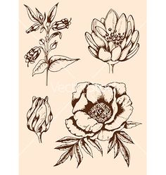 Vintage hand drawn flowers vector by Artspace on VectorStock®