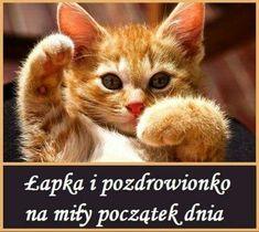 Motto, Good Morning, Qoutes, Positivity, Humor, Photography, Animals, Fotografia, Singer