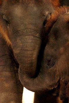 Elephants.We Have to Give Them a Future! #ivoryforelephants #stoppoaching #elephants for #ivory ! #animals