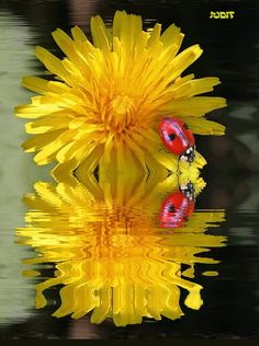 yellow gif images | Yellow Flower Water Reflection Animated Graphic