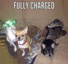 Electro-dog!!