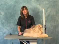 Importance of carding:    How to Groom:  Carding & Handstripping (for pets) Jodi Murphy Insructional Series DVD