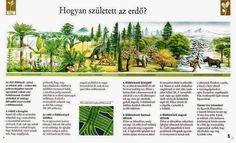 Erdők és lakóik - Kiss Virág - Picasa Webalbumok Cactus Plants, Vineyard, Golf Courses, Album, Outdoor, Animals, Picasa, Outdoors, Animales