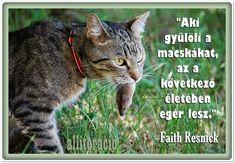 idézetek, macska, cica, cicás_képek, cat, photo, Cute Cats, Funny Cats, Diy And Crafts, Faith, Lol, Memes, Quotes, Animals, Minden