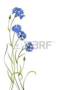 cornflower: blue cornflower flower bouquet illustration pattern isolated
