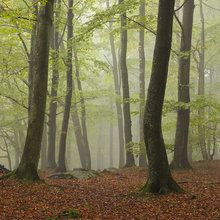 Valokuvatapetti - Stream in Swedish Beech Forest II