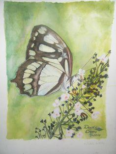 Malachite butterfly - watercolor 9/2010 - Copyright Donna Capps  http://mygardenblue.wordpress.com