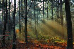 Sunbeams in the wood by Peenbuiker.deviantart.com on @DeviantArt