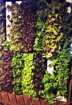 Green is the New Black: Vertical Gardens in Restaurants — Foodable WebTV Network
