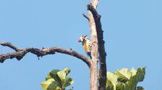 Cultuur en tijgers in India - reisverslag Sapotara - Reiskrant Reporter    Zie meer foto's op www.reiskrantreporter.nl/reports/7328