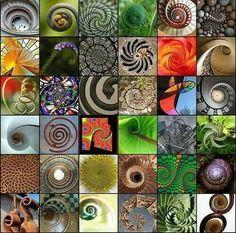 Spiralen, Spiralen, überall!