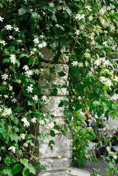 Summer House Garden, Dream Garden, Beautiful Gardens, Beautiful Flowers, Trees To Plant, Plant Leaves, White Clematis, Allotment Gardening, Moon Garden