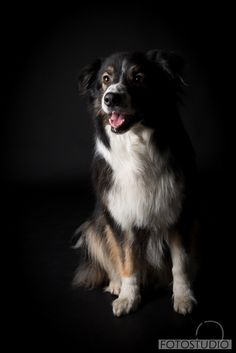 #hondenfotografie
