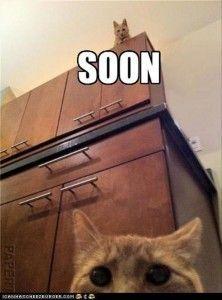soon... Ahahahahaha