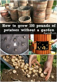 The 35 Easiest Container and Pot Friendly Fruits, Vegetables and Herbs - Page 2 of 3 - DIY & Crafts