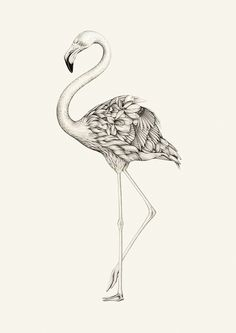 Flora Flamingo by Lauren Mortimer.   This is a giclee print of the graphite drawing 'Flora Flamingo'.  The A3 is printed on high quality 220gm paper. The A2 is printed on Hahnemuehle German Etching (matt textured) 310gsm paper.  Print Size: A3 (29.7cm x 42cm) OR A2 (42cm x 59.4cm)  Each print is signed and numbered by the artist, and comes in a limited edition of 75.