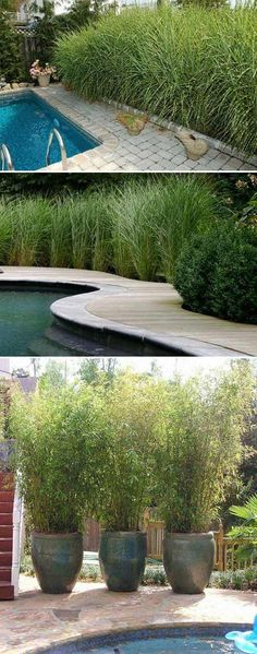 Nothing swimming pool privacy sturcture can beat a wall of friendly greenery for screening views from nearby neighbors(such as Miscanthus sinensis or bamboo). #swimmingpoolprivacy #poolprivacy