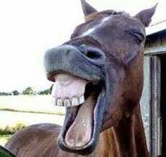 cavalo dando risada