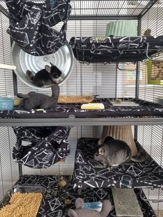 Animal Room, Animal House, Assault Course, Chinchilla Cage, Rat Cage, Rat Toys, Ferrets, Totoro, Guinea Pigs