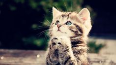 Cute kitten praying