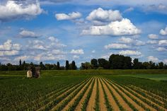 (11) Ganadería y Agricultura