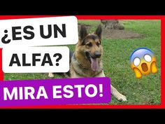 - YouTube Youtube, Dogs, Sports, Pets, Make Up, Gatos, Hs Sports, Pet Dogs, Doggies