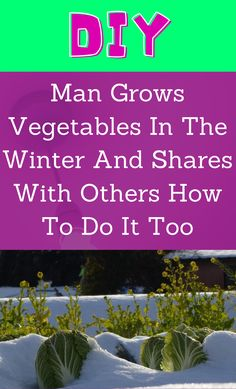 Growing Herbs, Growing Vegetables, Backyard Farming, Backyard Landscaping, Container Gardening, Gardening Tips, Diy Garden Projects, Grow Your Own Food, Companion Planting